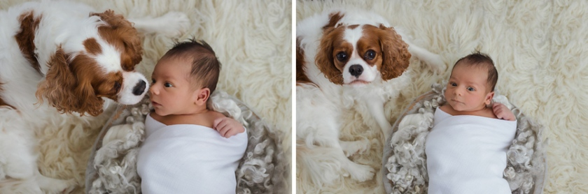 simple_baby_boy_newborn_session-with-puppy-portjefferson-newyork-longisland-photography-jessicamichellephoto